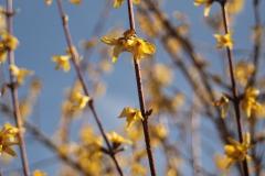 Frühjahrsimpressionen-2020-Gersdorf-36