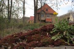 Frühjahrsimpressionen-2020-Gersdorf-4