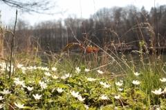 Frühjahrsimpressionen-2020-Gersdorf-43