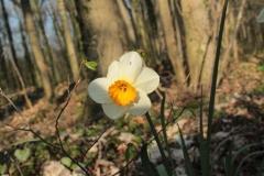 Frühjahrsimpressionen-2020-Gersdorf-56