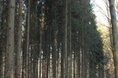 Frühjahrsimpressionen 2020 Gersdorf